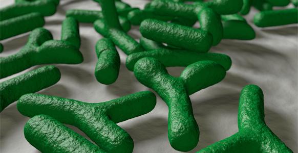 Wirkstoff Bifidobakterien B. bifidum MIMBb75